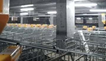 Farm for pig in China - feeding system from SKIOLD